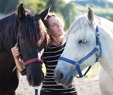 versammlung pferd erarbeiten